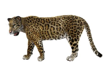 Digitale 3D rendering di un grande jaguar gatto isolato su sfondo bianco