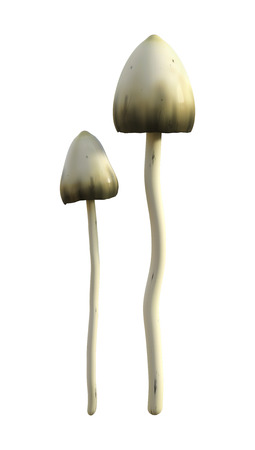3D illustration of magic mushrooms isolated on white background Stock Photo