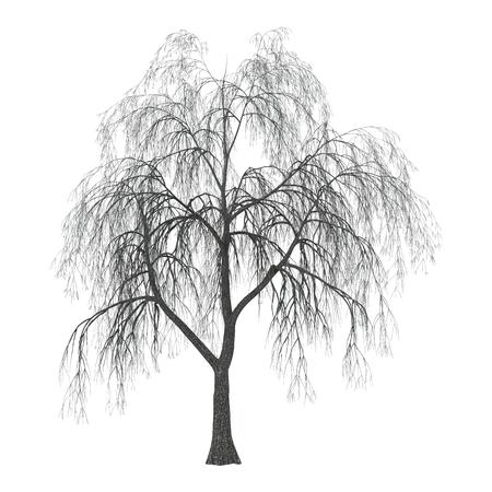 부드러운 버드 나무 또는 아로 우 또는 osier 흰색 배경에 고립의 3D 일러스트 스톡 콘텐츠