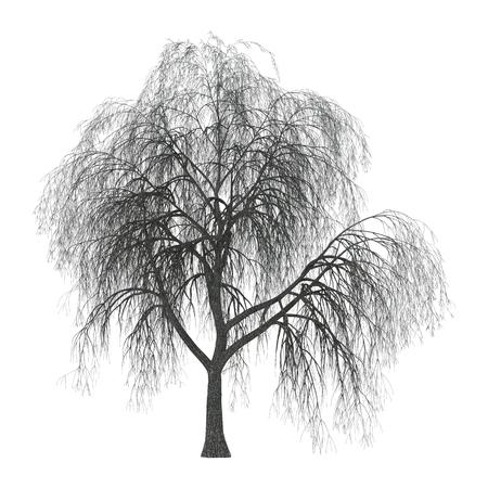 3D illustratie van een treurwilg of vaal of katwilg op een witte achtergrond
