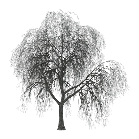 3D Illustration of a weeping willow or sallow or osier isolated on white background Banco de Imagens