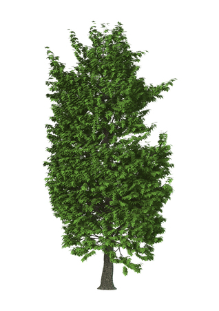 3D Illustration of a green chestnut tree isolated on white background