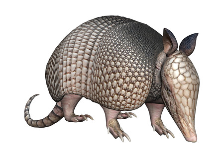 3D rendering of a wild armadillo isolated on white background Imagens