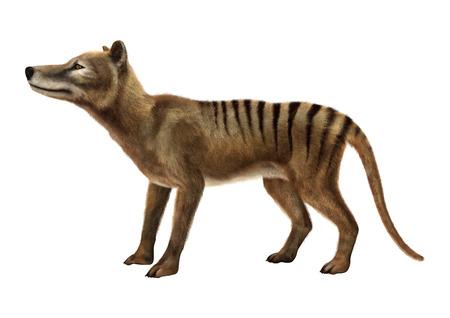 Representación 3D de un tilacino animal murió aislado en el fondo blanco Foto de archivo