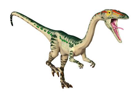 공룡의 3D 렌더링 흰색 배경에 고립 된 Coelophysis 스톡 콘텐츠