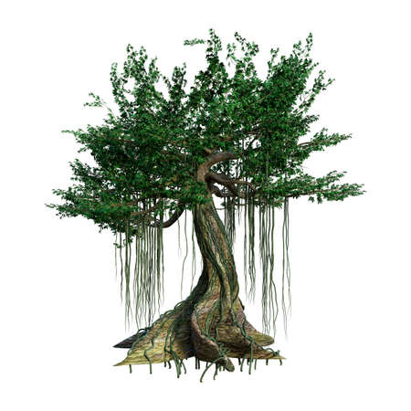 3D rendering of a kapok tree isolated on white background