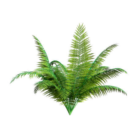 3D rendering of a giant fern plant isolated on white background 版權商用圖片