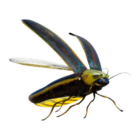 3D rendering of a lightning bug isolated on white background Imagens