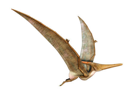 3D rendering of a prehistoric reptile Pteranodon isolated on white background Imagens