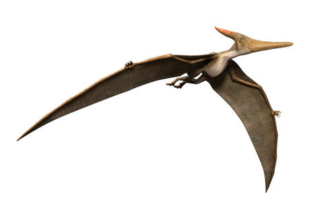 3D rendering of a prehistoric reptile Pteranodon isolated on white background 版權商用圖片