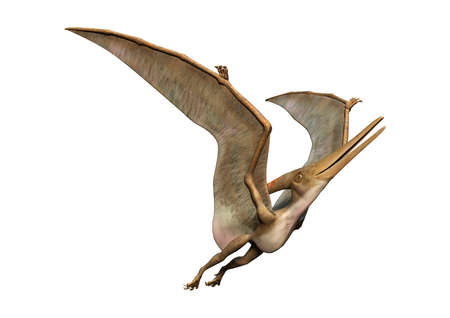 3D rendering of a prehistoric reptile Pteranodon isolated on white background Stock Photo