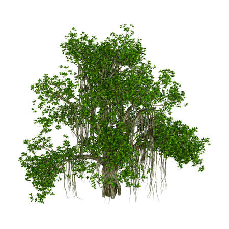 3D rendering of a banyan tree isolated on white background Imagens