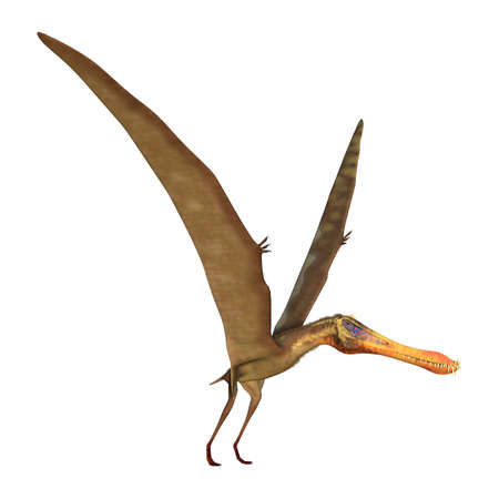 3D rendering of a pterodactyl Anhanguera isolated on white background
