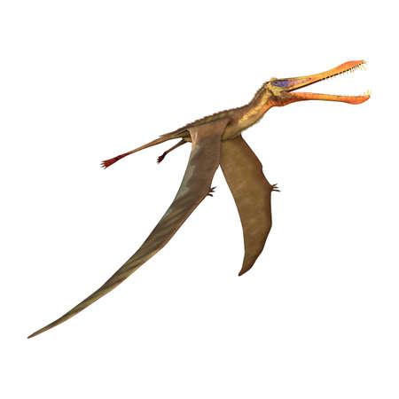 3D-weergave van een pterodactyl Anhanguera geïsoleerd op een witte achtergrond