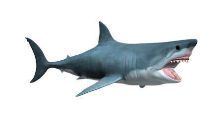 3D rendering of a great white shark isolated on white background Imagens