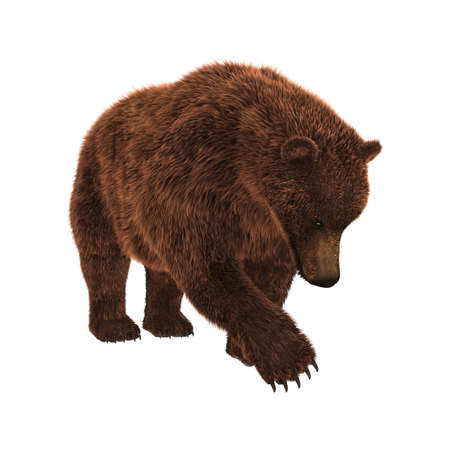3D rendering of a brown grizzly bear isolated on white background