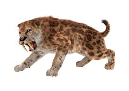 Rendering 3D di una tigre dente di sciabola isolato su sfondo bianco