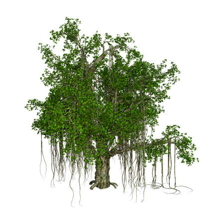 3D rendering of a banyan tree isolated on white background Stock Photo