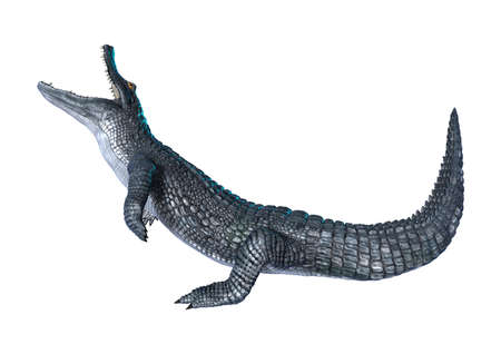 3D rendering of an alligator caiman isolated on white background