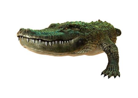 흰색 배경에 고립 된 녹색 미국 악어의 3D 렌더링 스톡 콘텐츠