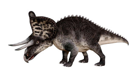 3D rendering of a dinosaur Zuniceratops isolated on white background Banco de Imagens
