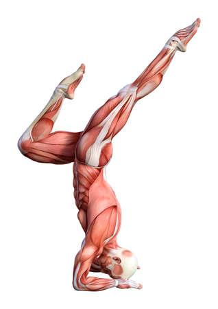 Het 3D teruggeven van een mannelijk anatomiepatroon met spieren brengt het uitoefenen van yoga in kaart die op witte achtergrond wordt geïsoleerd
