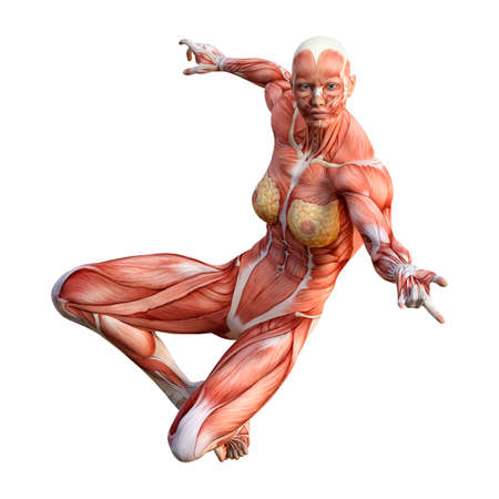 3D rendering of a female figure with muscle maps isolated on white background Stockfoto