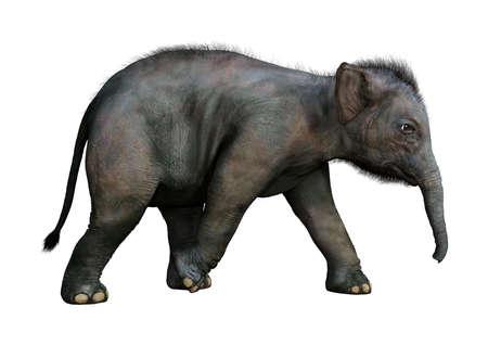 Het 3D teruggeven van een Indische olifantsbaby die op witte achtergrond wordt geïsoleerd