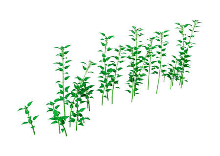 3D rendering of Urtica dioica, or common nettle, or stinging nettle isolated on white background Stock Photo