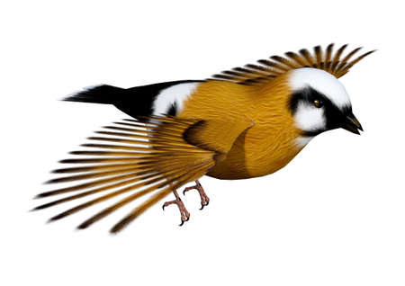 3D rendering of a parsons finch or black-throated finch bird isolated on white background