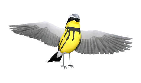 3D rendering of a songbird wrabler isolated on white background