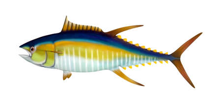3D rendering of a yellowfin tuna isolated on white background Imagens