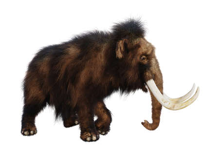 3D rendering of a woolly mammoth isolated on white background