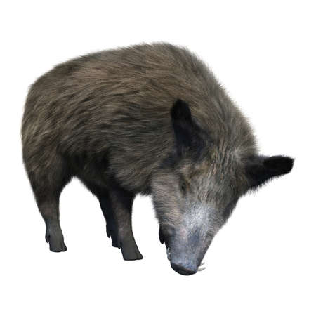 3D rendering of a wild boar isolated on white background Banco de Imagens