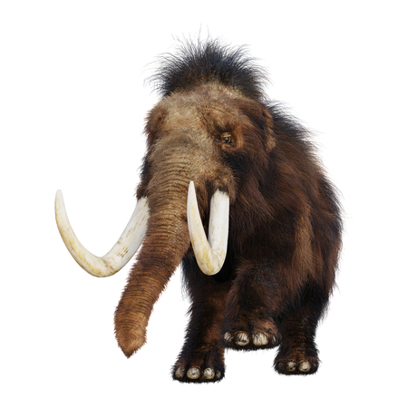 3D rendering of a woolly mammoth isolated on white background Stock fotó
