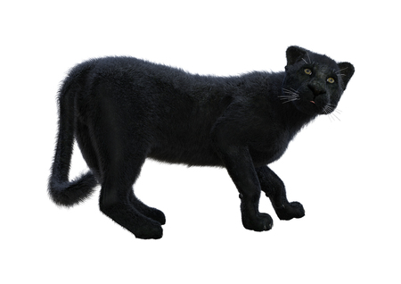 3D rendering of a black panther isolated on white background Standard-Bild
