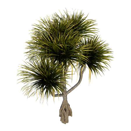 3D rendering of a pandanus tree isolated on white background