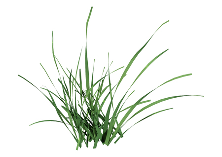 3D rendering of a green grass clump isolated on white background 免版税图像