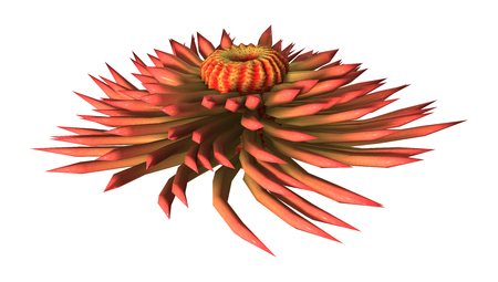 3D rendering of a sea anemone isolated on white background 版權商用圖片