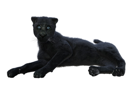 3D rendering of a black panther isolated on white background Archivio Fotografico