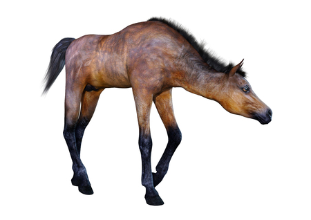 3D rendering of a bay horse foal isolated on white background Banque d'images - 115206610