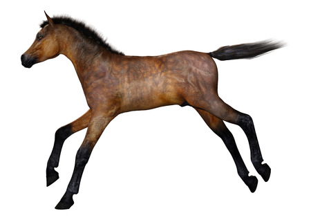 3D rendering of a bay horse foal isolated on white background Imagens - 115206648