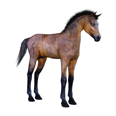 3D rendering of a bay horse foal isolated on white background