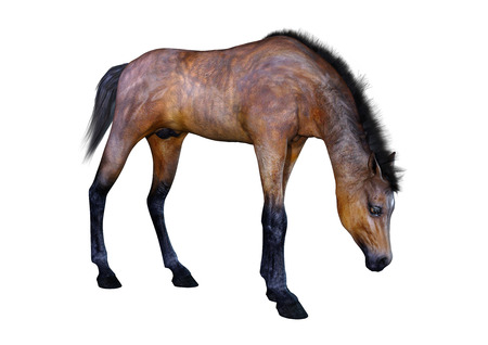 3D rendering of a bay horse foal isolated on white background Stock Photo - 116204146