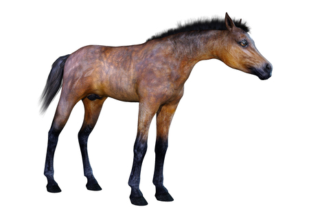 3D rendering of a bay horse foal isolated on white background Stock Photo - 116204155