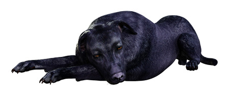 3D rendering of a black labrador dog isolated on white background