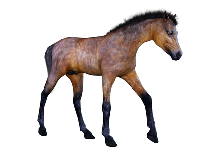 3D rendering of a bay horse foal isolated on white background Imagens - 116892897
