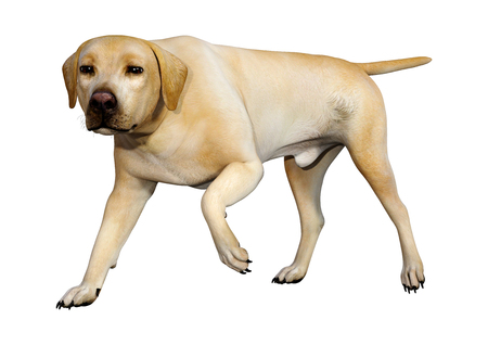 3D rendering of a yellow labrador dog isolated on white background Stock Photo