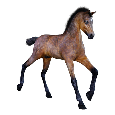 3D rendering of a bay horse foal isolated on white background Banque d'images - 119807041