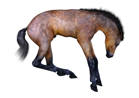 3D rendering of a bay horse foal isolated on white background Stock Photo - 119736206